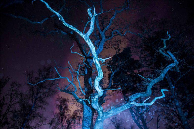 Fotografi af træ taget om natten.